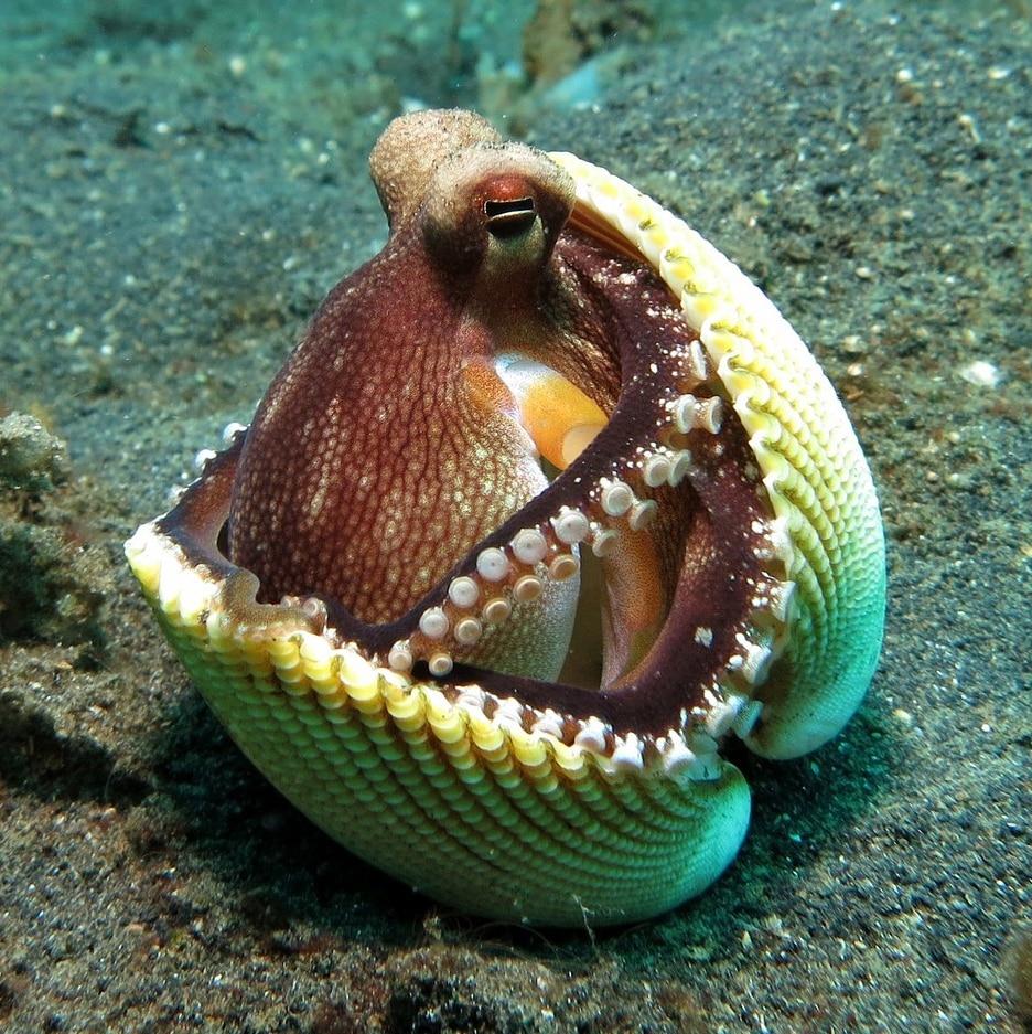 Octopus 1144665 1920 Sq