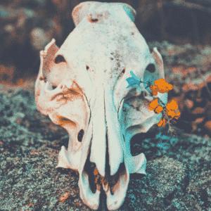 Ritual.autumn.24.hr.raw (1)