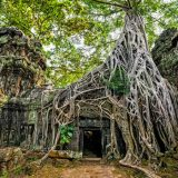 28232560-ancient-khmer-architecture-ta-prohm-temple-with-giant-banyan-tree-at-angkor-wat-complex-siem-reap-ca