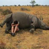 f51565cefdbc5cce4195245105e9562f-rhino-poaching-extinct-animals